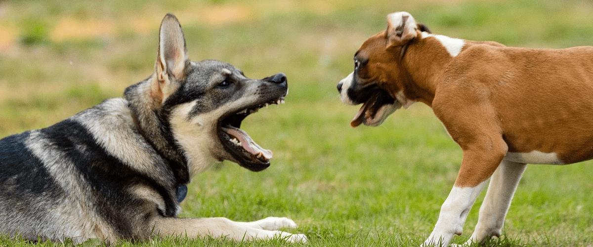 Las 10 razas más conocidas de perros grandes