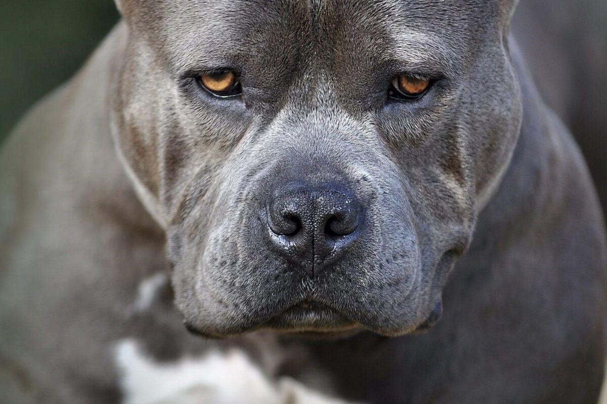 Nombres agresivos para perros