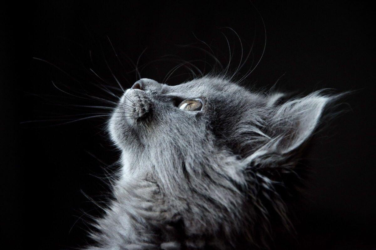 Nombres para gatitas