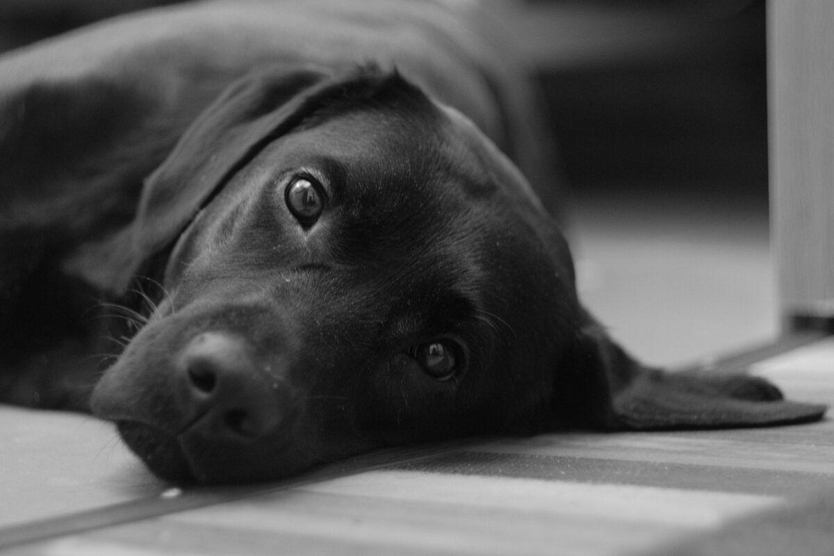 Nombres para perros negros