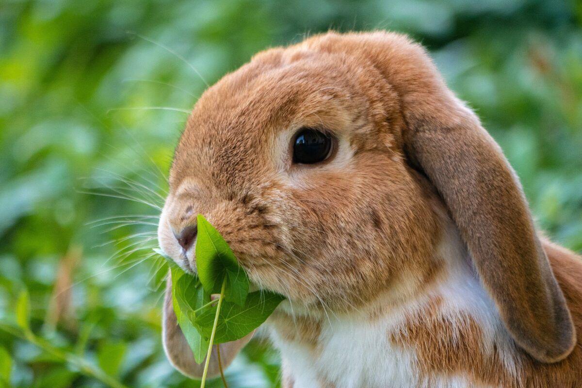 Nombre para conejos hembras
