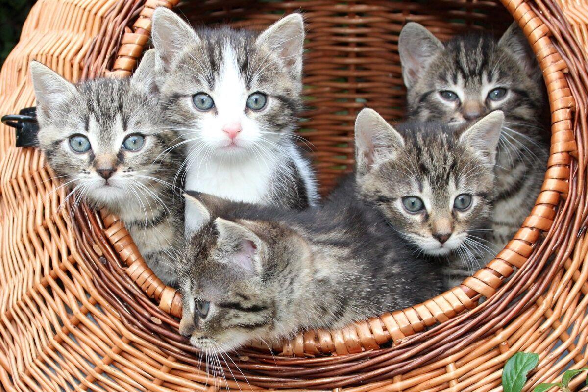 Gatitos bebés | Adopción, cuidados, recomendaciones