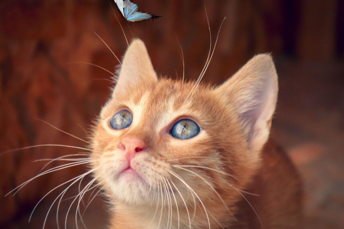 Las mejores fotos de gatitos bebés