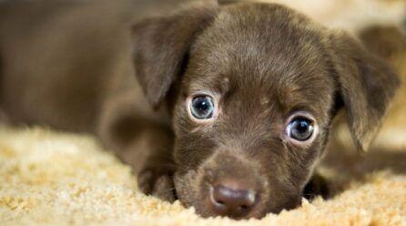 ¿Cómo adoptar cachorros? ¿Qué debo hacer?