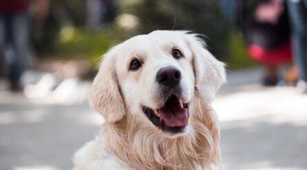 Las 5 enfermedades más comunes en los perros
