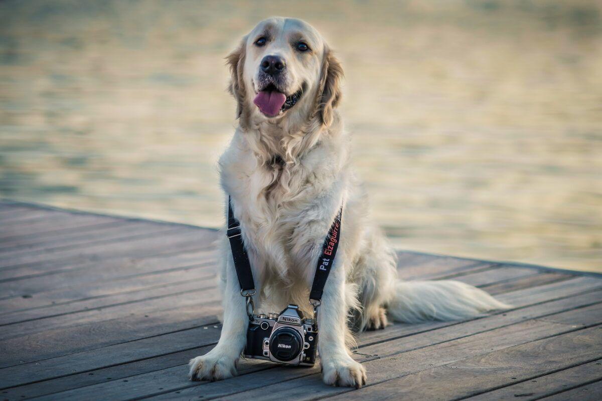 ¡Las fotos de perros más tiernas! Las razas más bonitas
