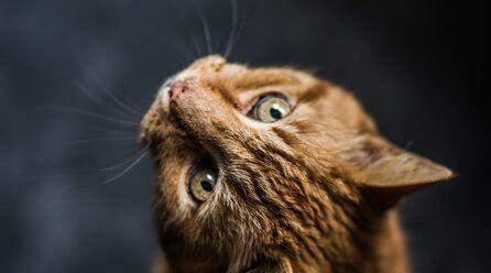 Nombres para gatos naranjas