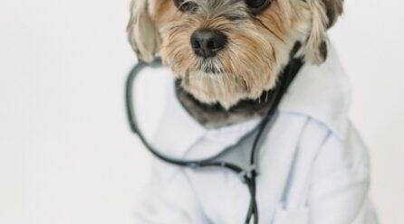 Polaramine para mascotas   ¿Que es? ¿dosis? ¿efectos secundarios?