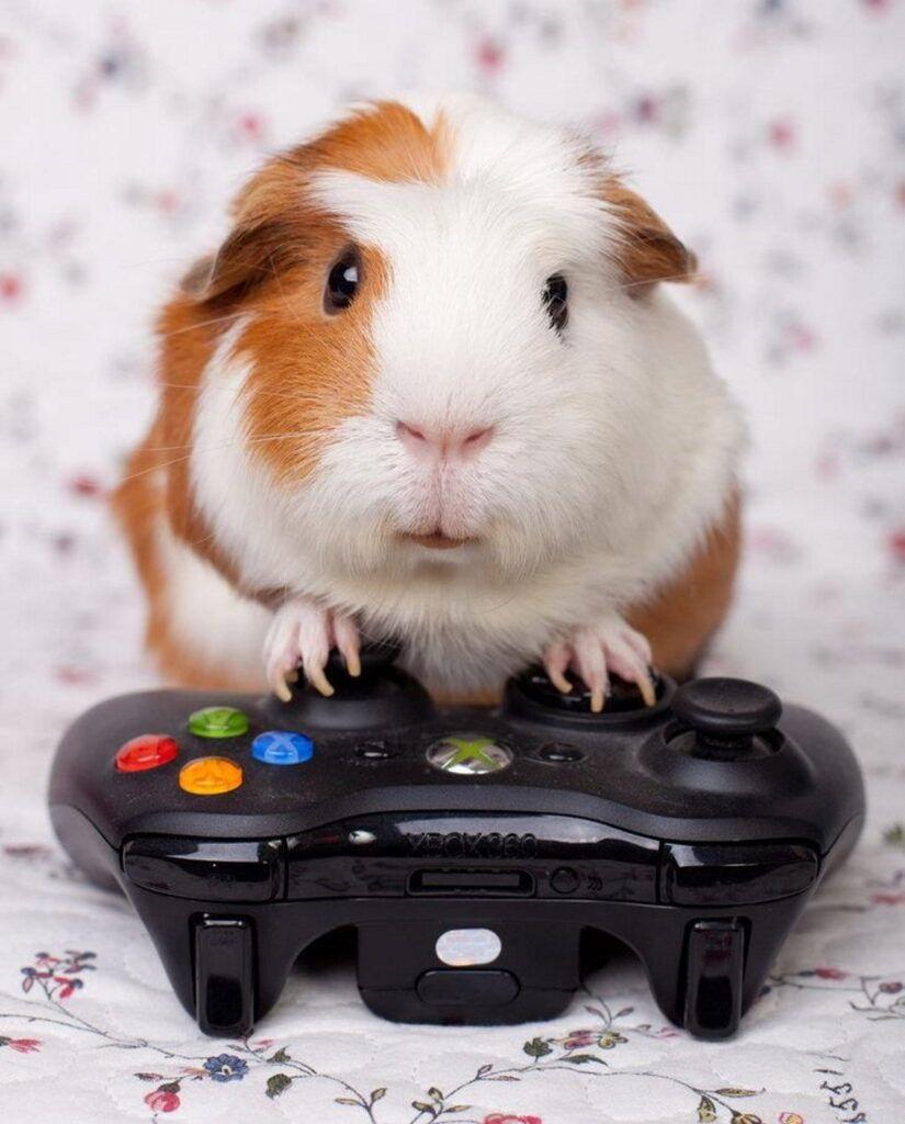 cobaya gamer