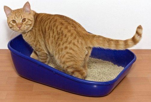 gato usando el arenero