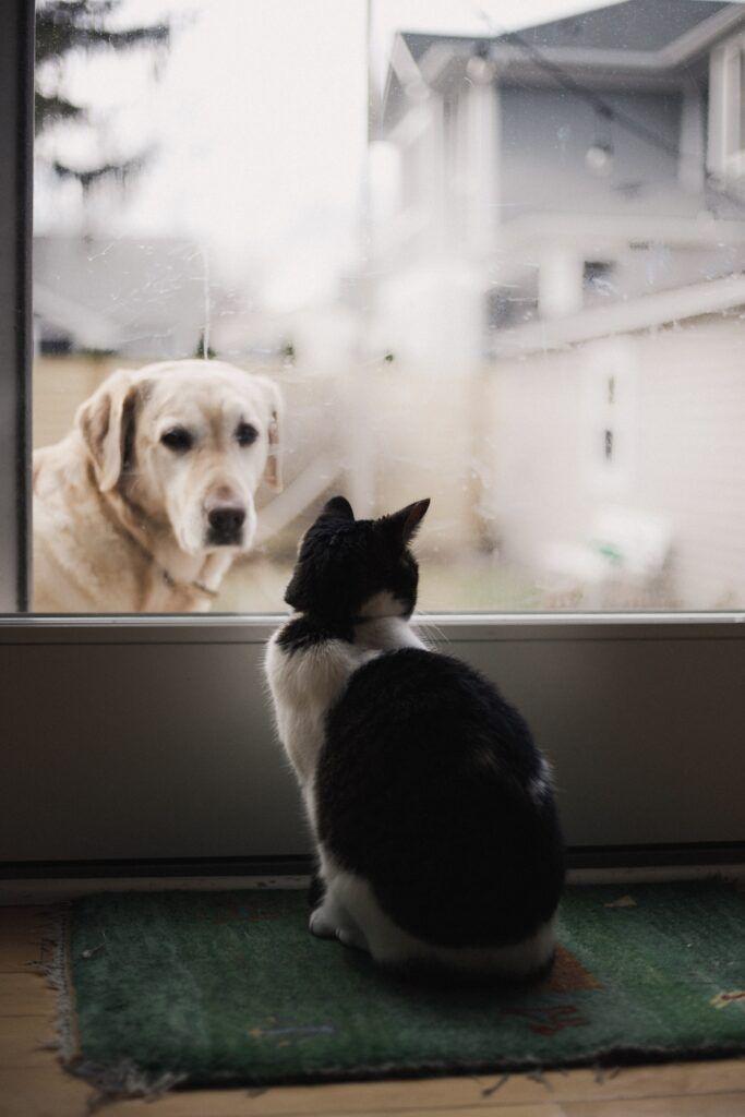 vista del gato y el perro