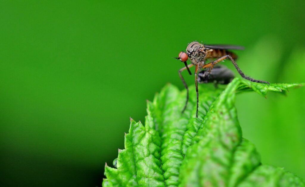 remedios contra mosquitos