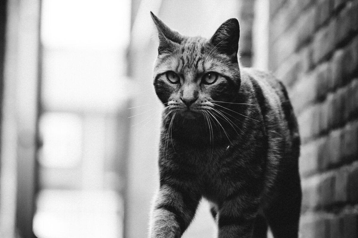 Cómo quitar una garrapata a un gato