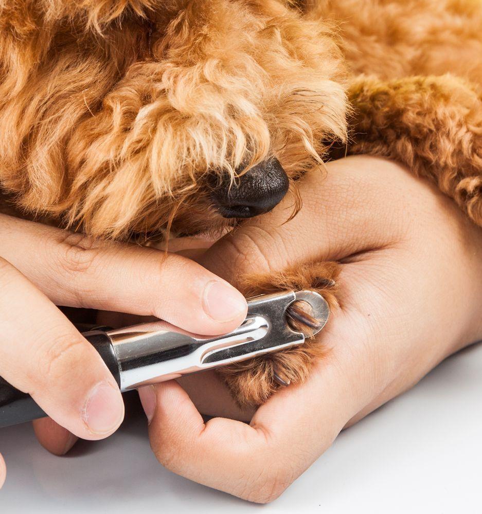 Cortarle las uñas a un perro