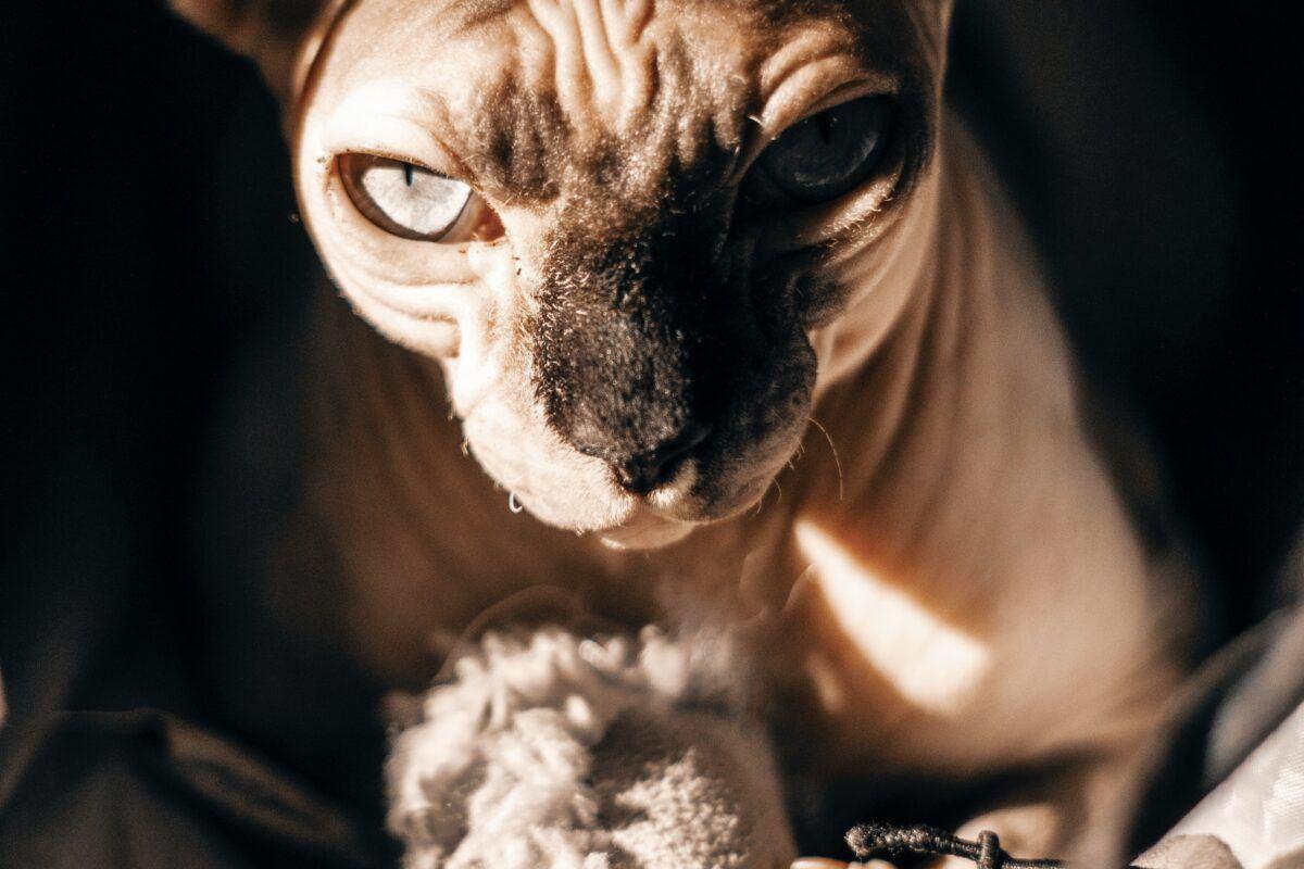 Qué hacer si tengo alergia a la piel de los gatos