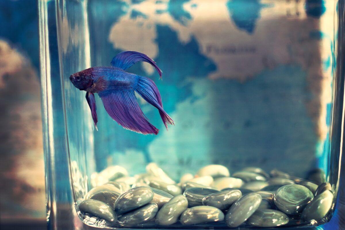 Cómo duerme un pez | Tips para saber si tu pez está durmiendo