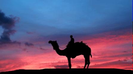 En que se diferencian un Camello y un dromedario | ¿Cuántas jorobas tienen?