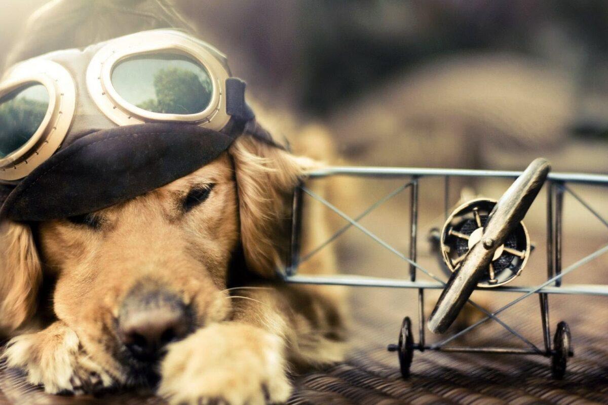 Cómo viajar con un perro en avión