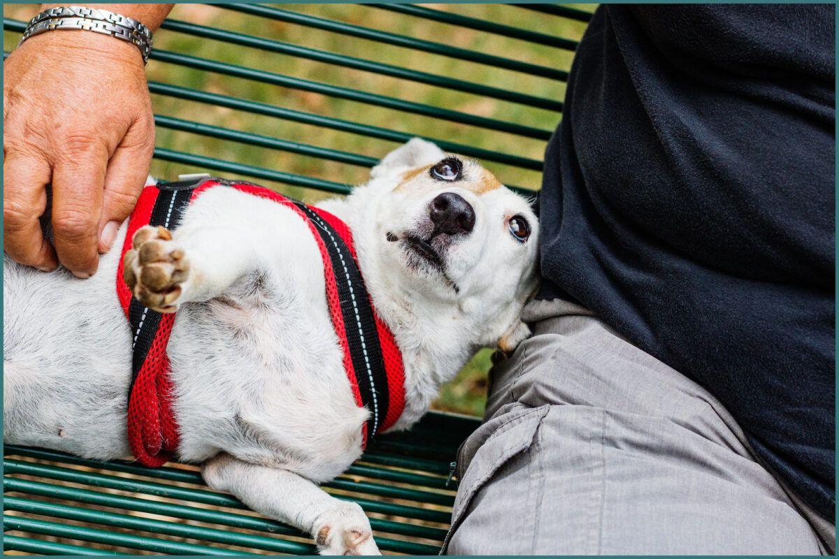 Cómo aliviar el colapso traqueal en perros
