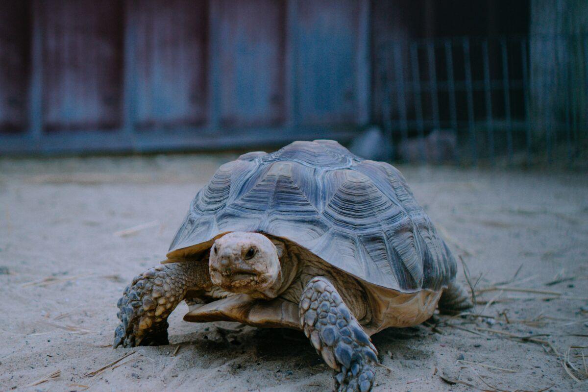 Terrario tortuga de tierra