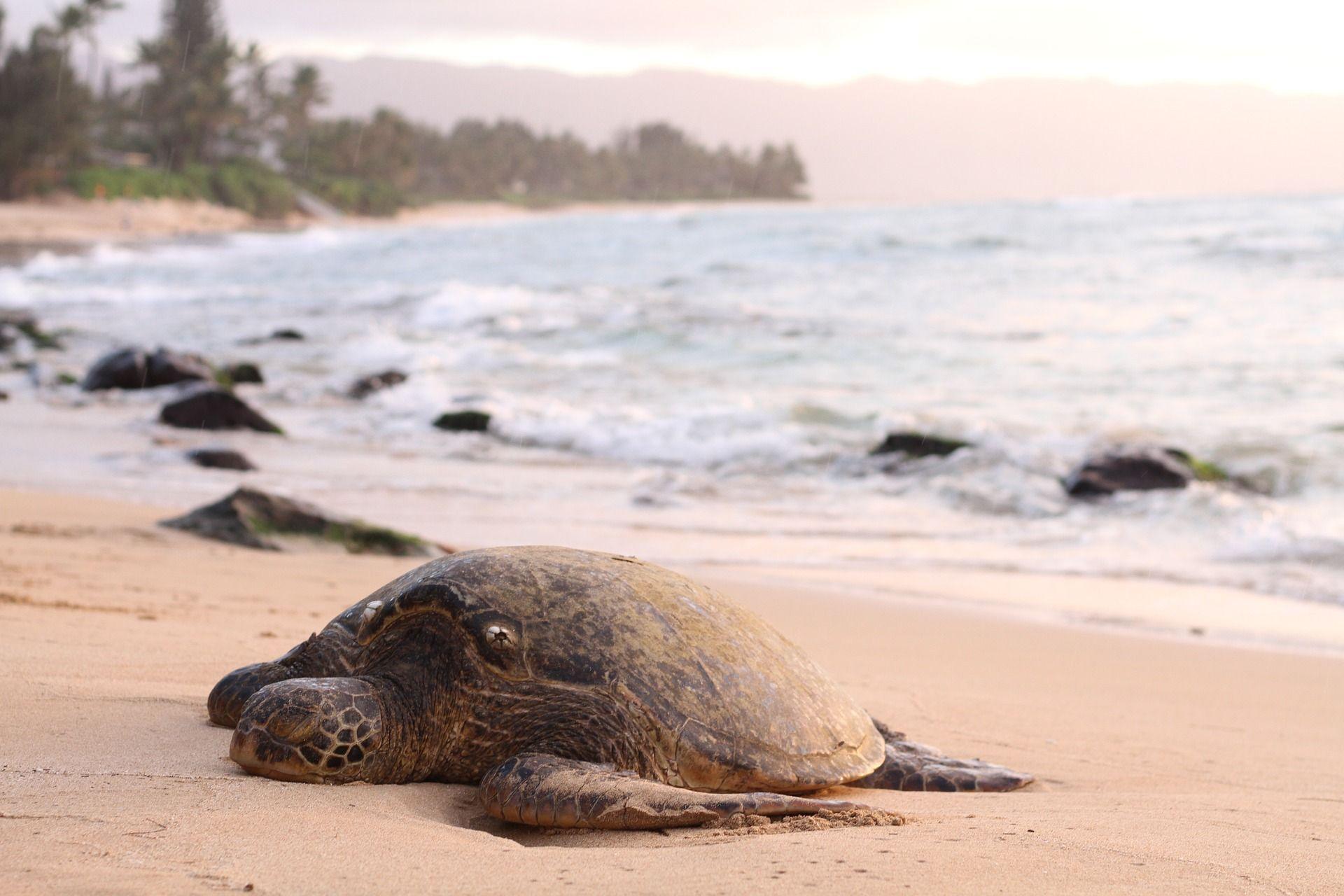 ¿Cuántos años vive una tortuga marina?