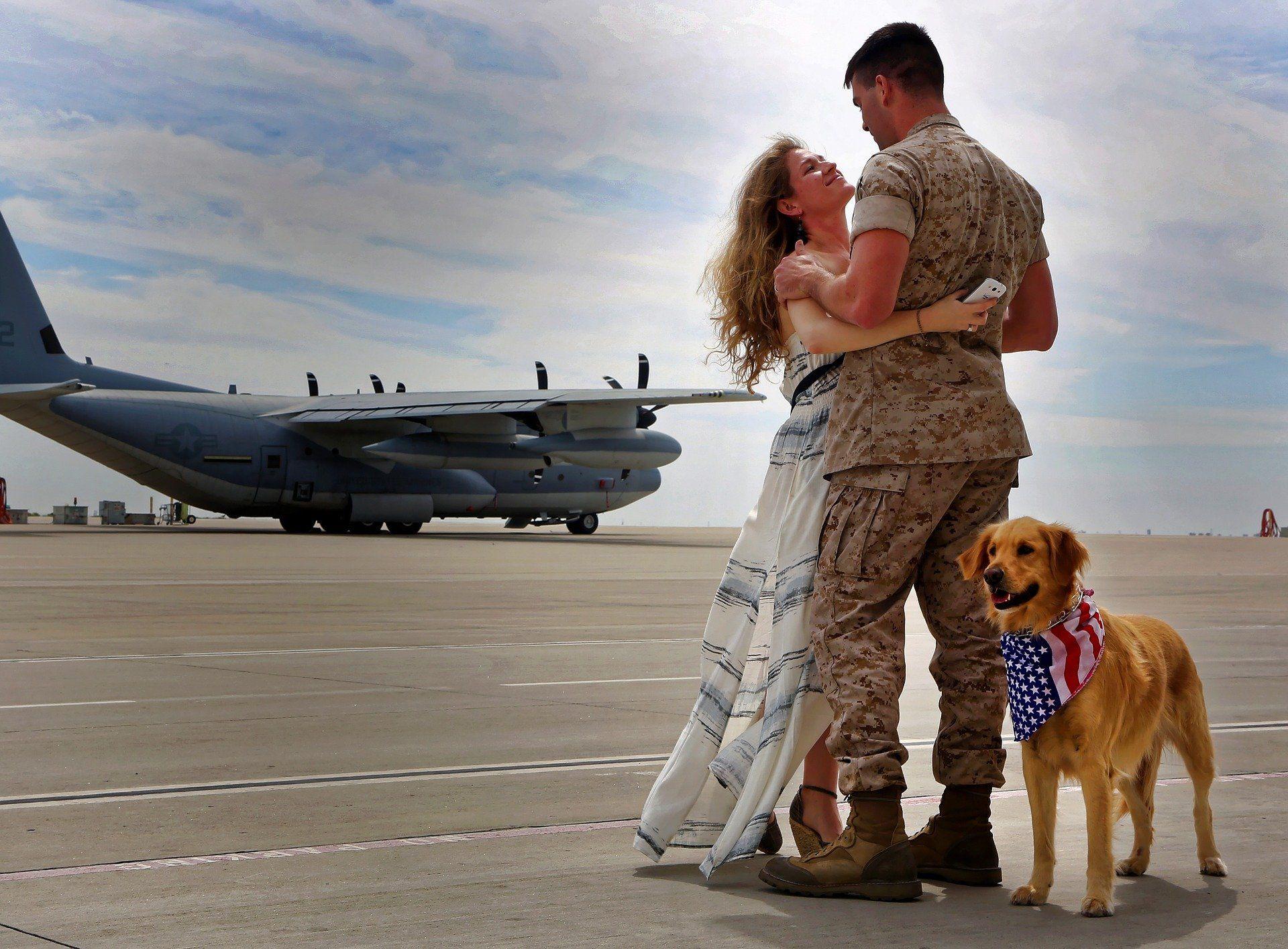 viaje perro en avión