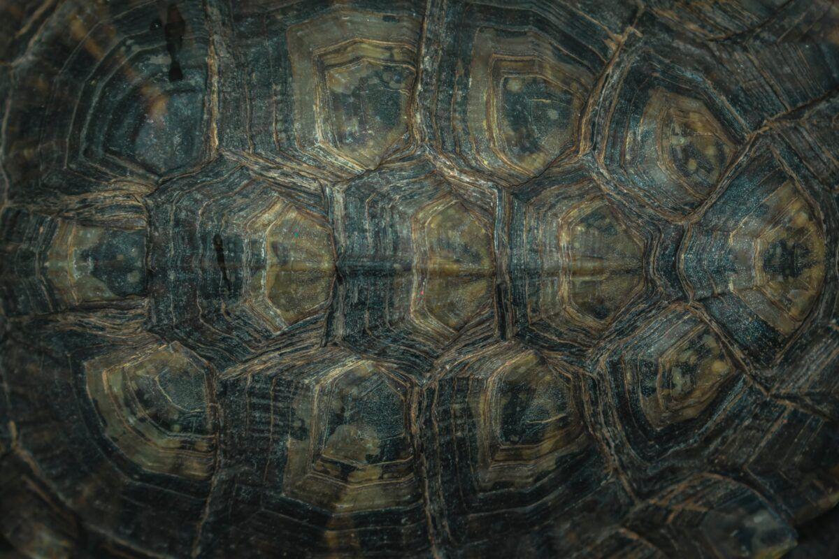 Diferencias entre las tortugas de agua y tierra