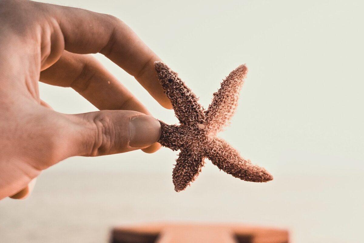 Qué comen las estrellas de mar