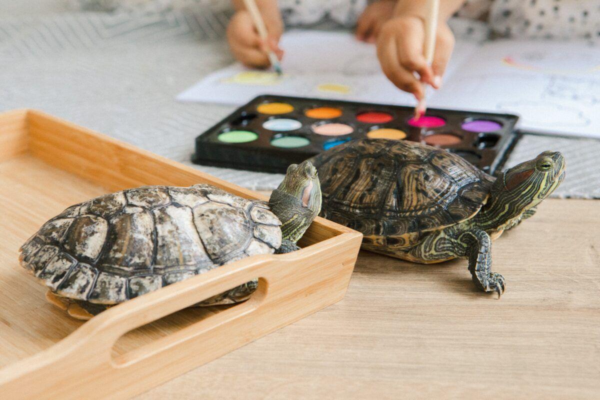 ¿Cómo cuidar una tortuga?