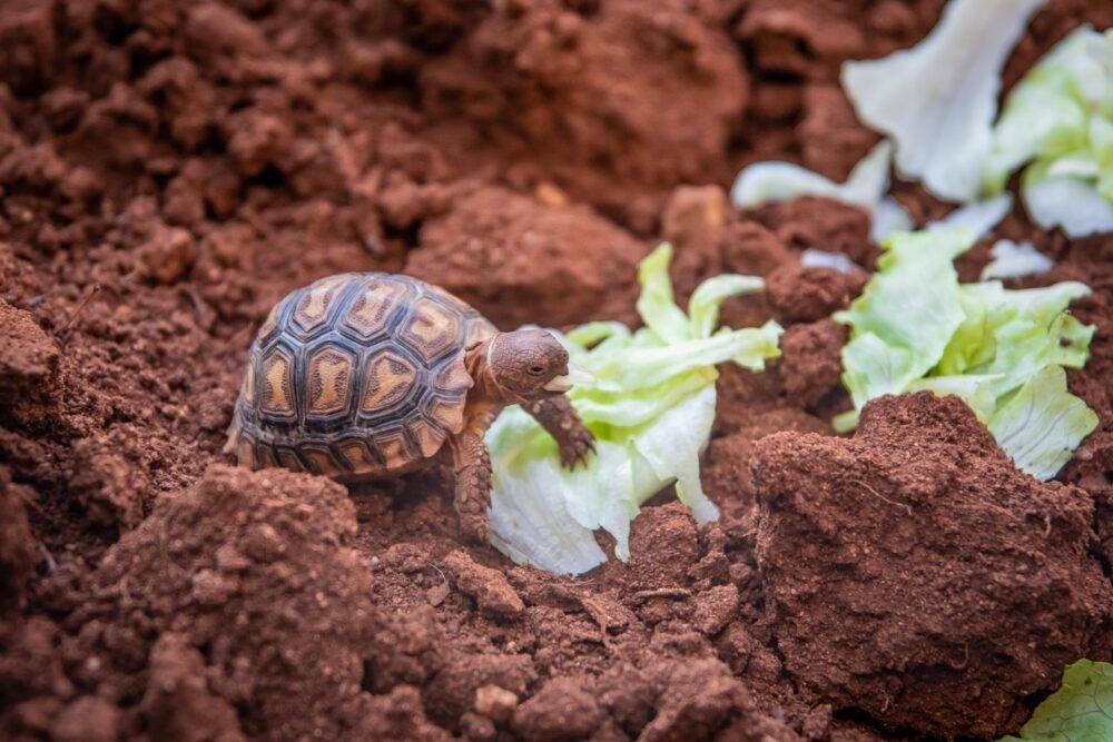 Alimentación de la tortuga