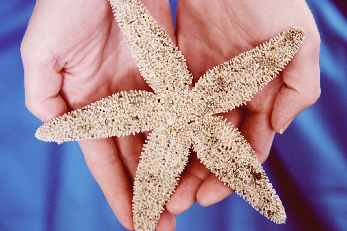 ¿Las estrellas de mar tienen cerebro?
