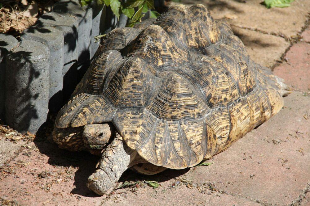 Problemas que suelen afectar a las tortugas