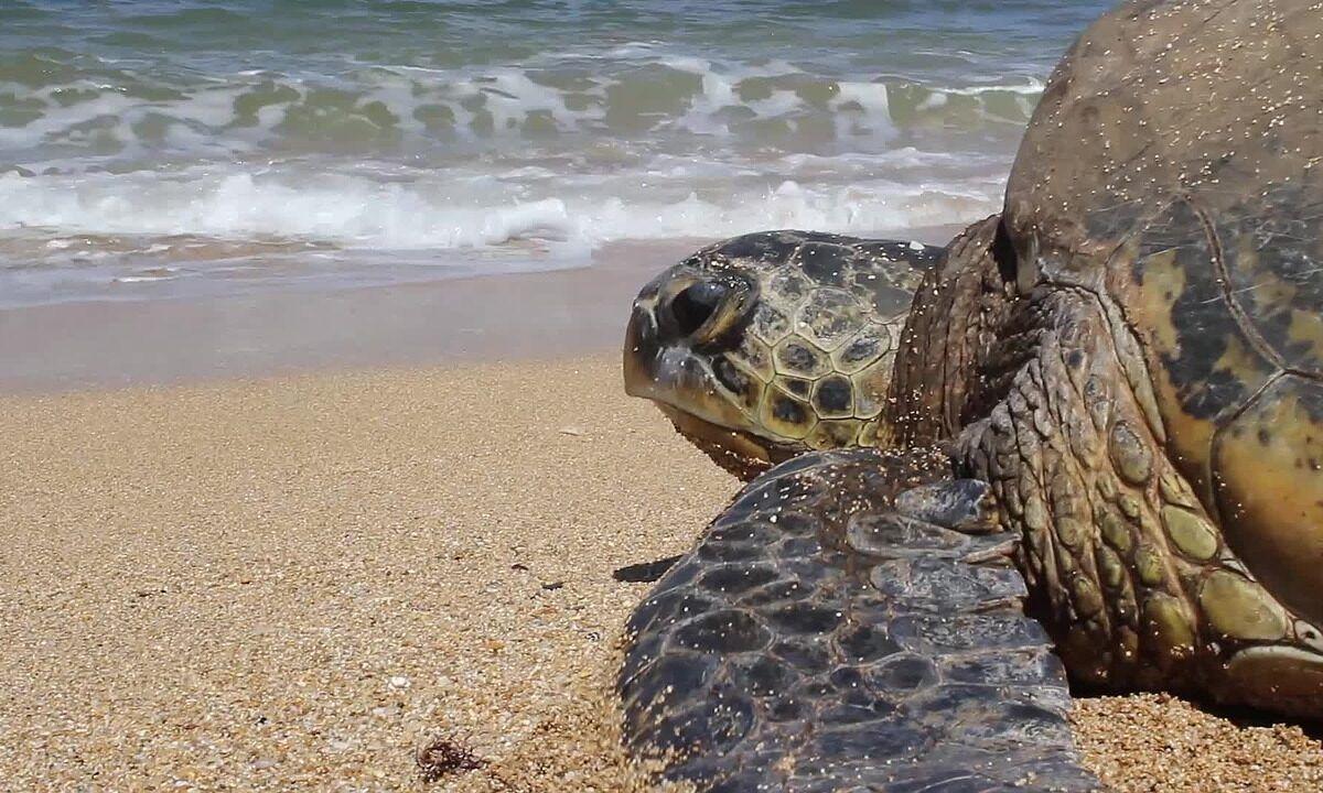 ¿Cuántos años vive una tortuga?