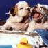 ¿Cuándo se puede bañar a un cachorro?