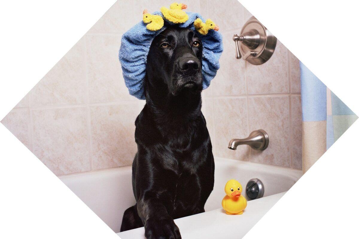 ¿Cada cuánto bañar a un perro?