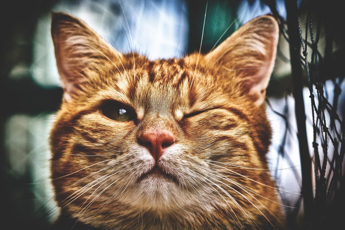Nombres para gatos en japonés