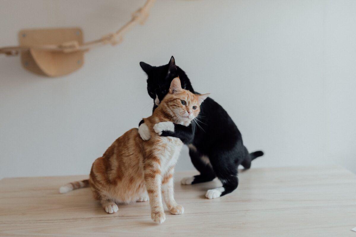 ¿Es verdad que los gatos tienen sentimientos?