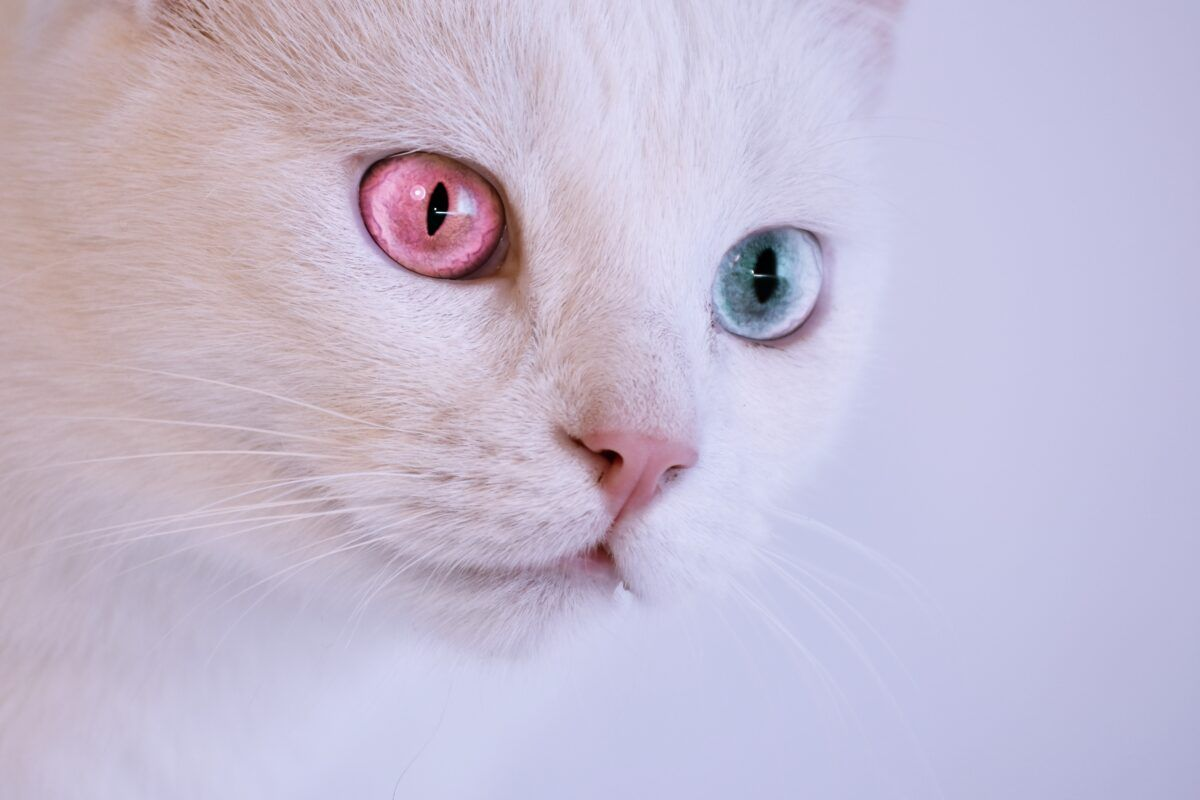 Nombres de gatos mitológicos