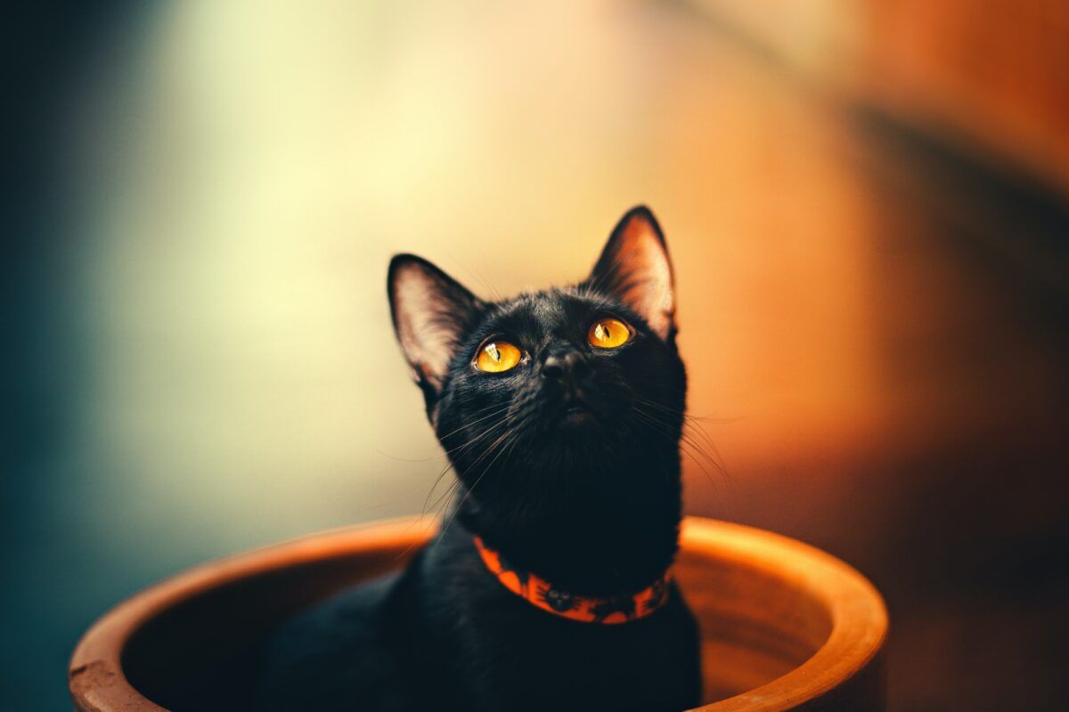 Nombres de gatas negras