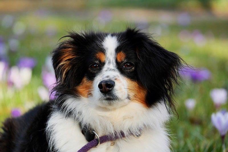 Los problemas veterinarios asociados a la primavera en perros y gatos