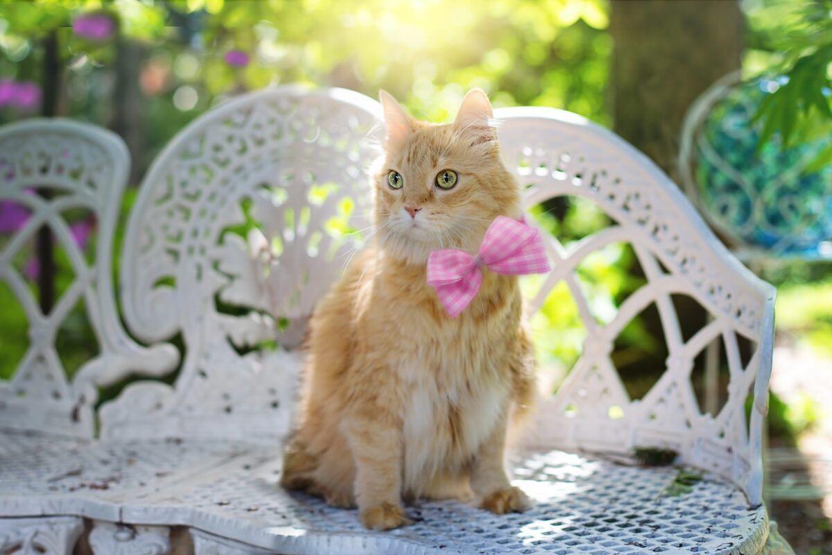 Gatos en verano ¿Cómo cuidarlos?