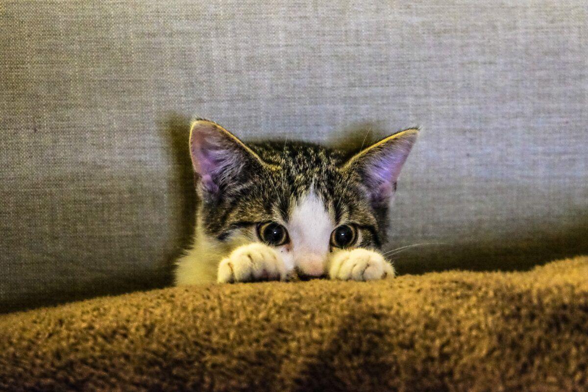Diarrea en gatos