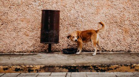 Tipos de diarrea en perros