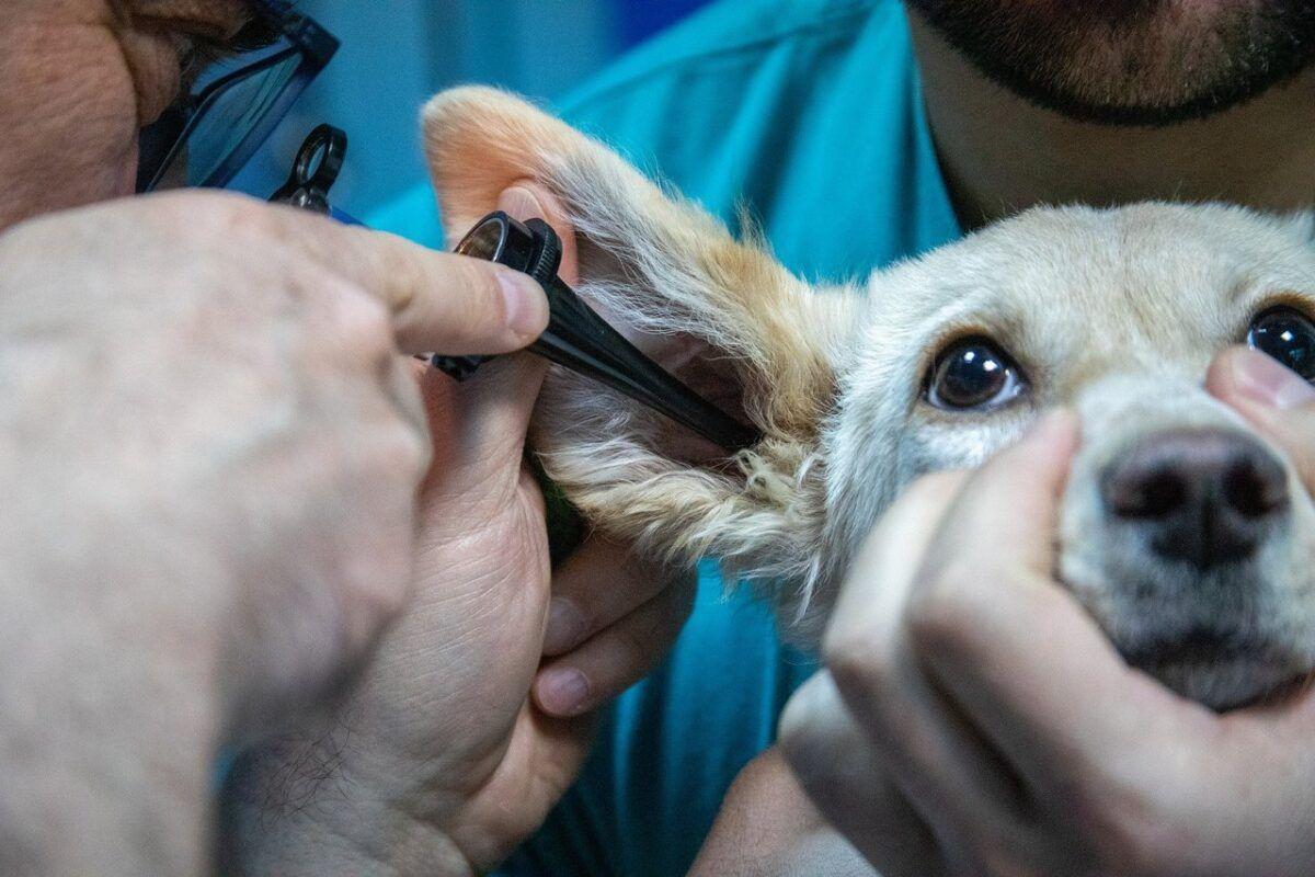 Recursos para clínicas veterinarias