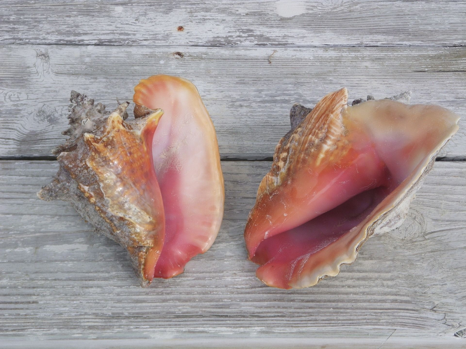Caracolas marinas