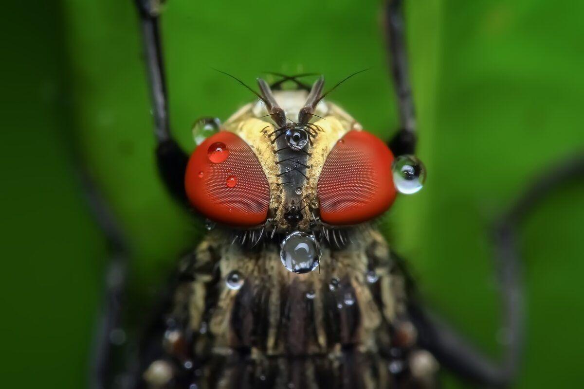 ¿Cómo ven las moscas?