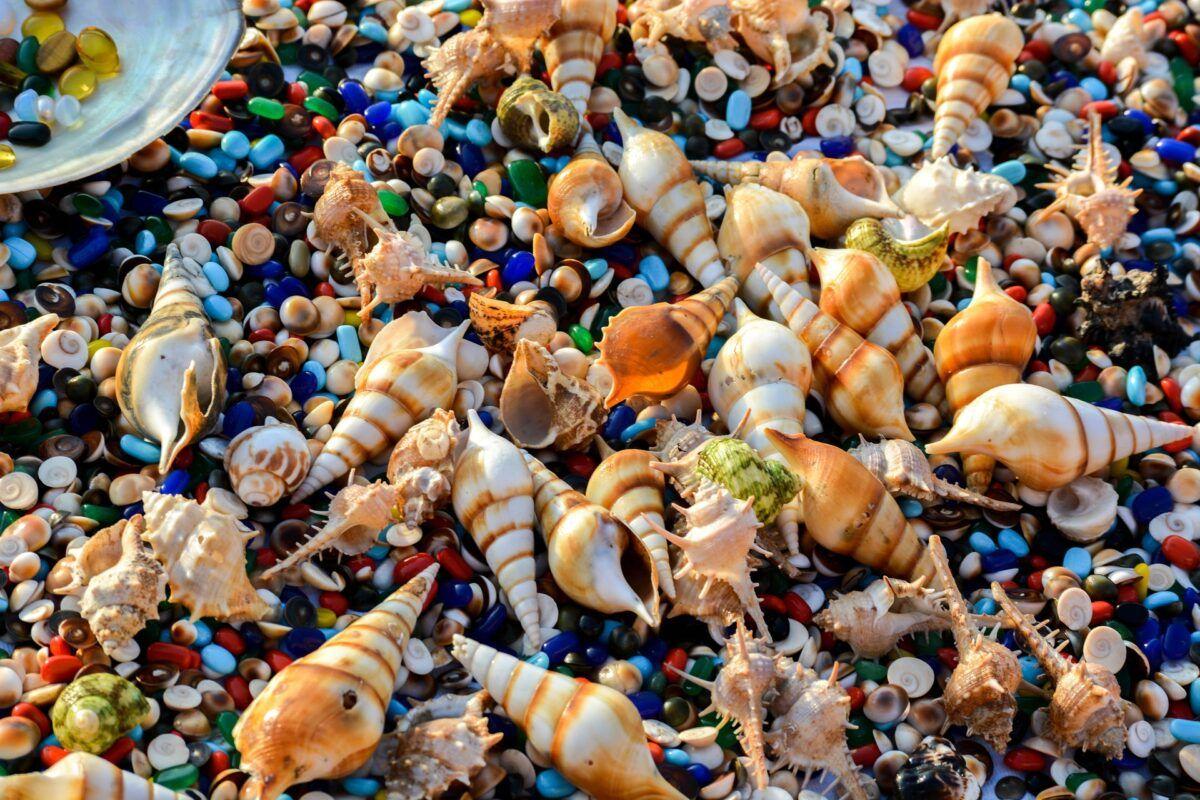 Tipos de caracolas de mar