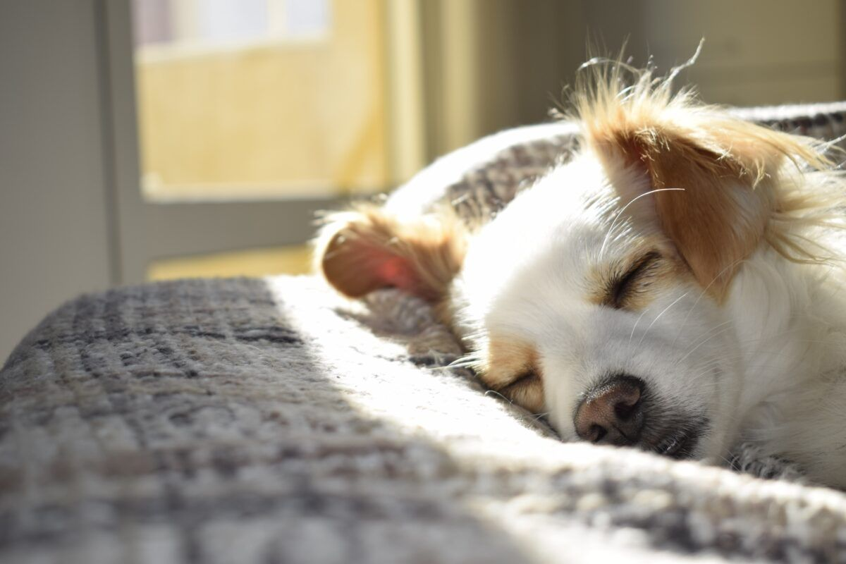 ¿Cómo eliminar pulgas de la cama?