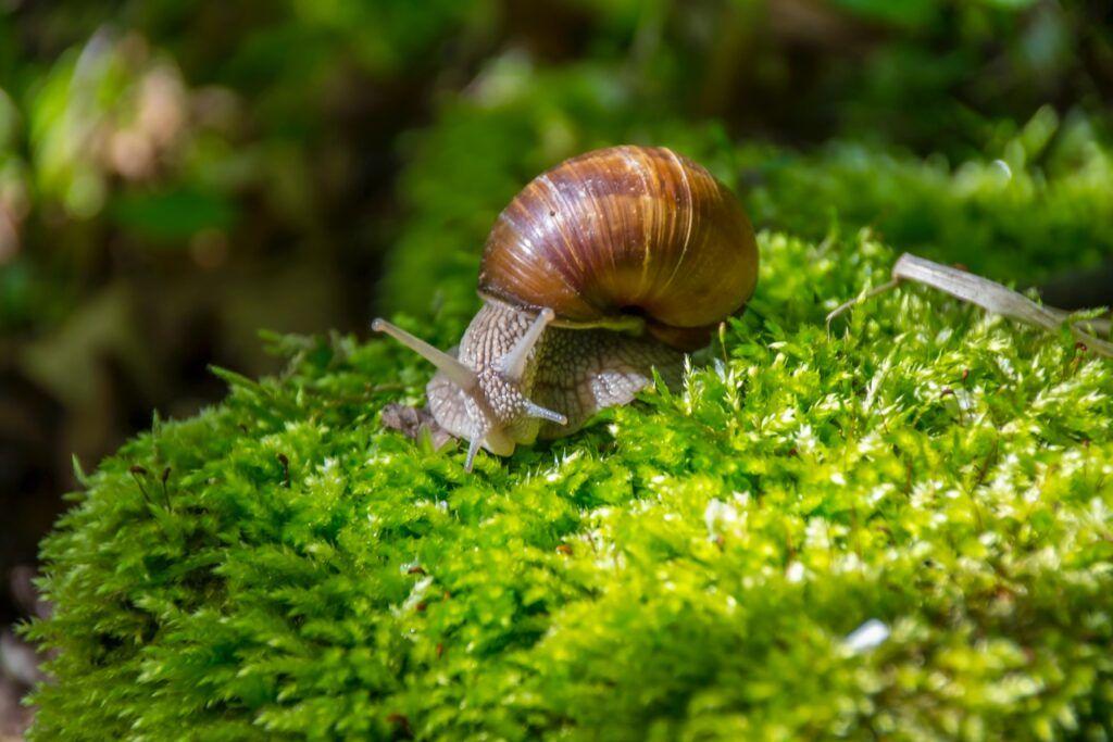Caracoles -Gastrópodos