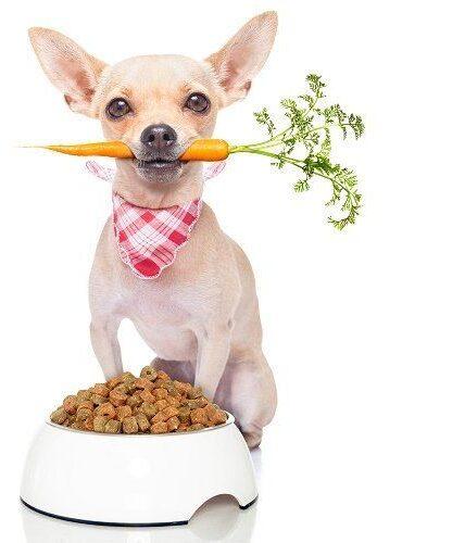 zanahoria para los perros